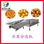 TS-F250-腾昇供应水果分选机 各种水果分级机 分选机 质优价廉