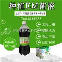 广西博白县种植龙眼用的种植em菌促长增收
