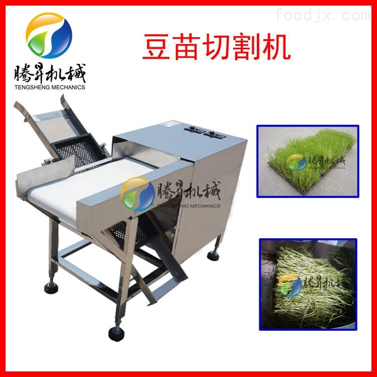 腾昇厂家供应豆苗切割机TS-Q698 商用豆苗机