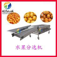 TS-FS340-沙糖桔/红橙/脐橙分级机 滚桶式果蔬分选机