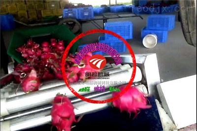 出口越南火龙果清洗机