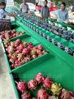 贵州火龙果分选大小的设备