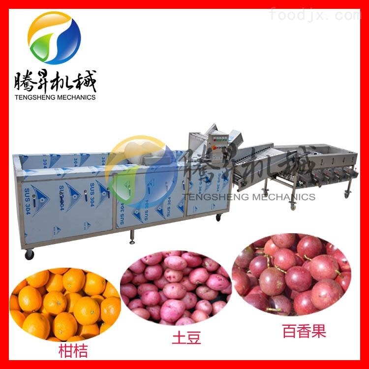 柑桔橙子清洗分级生产线 水果分选清洗机
