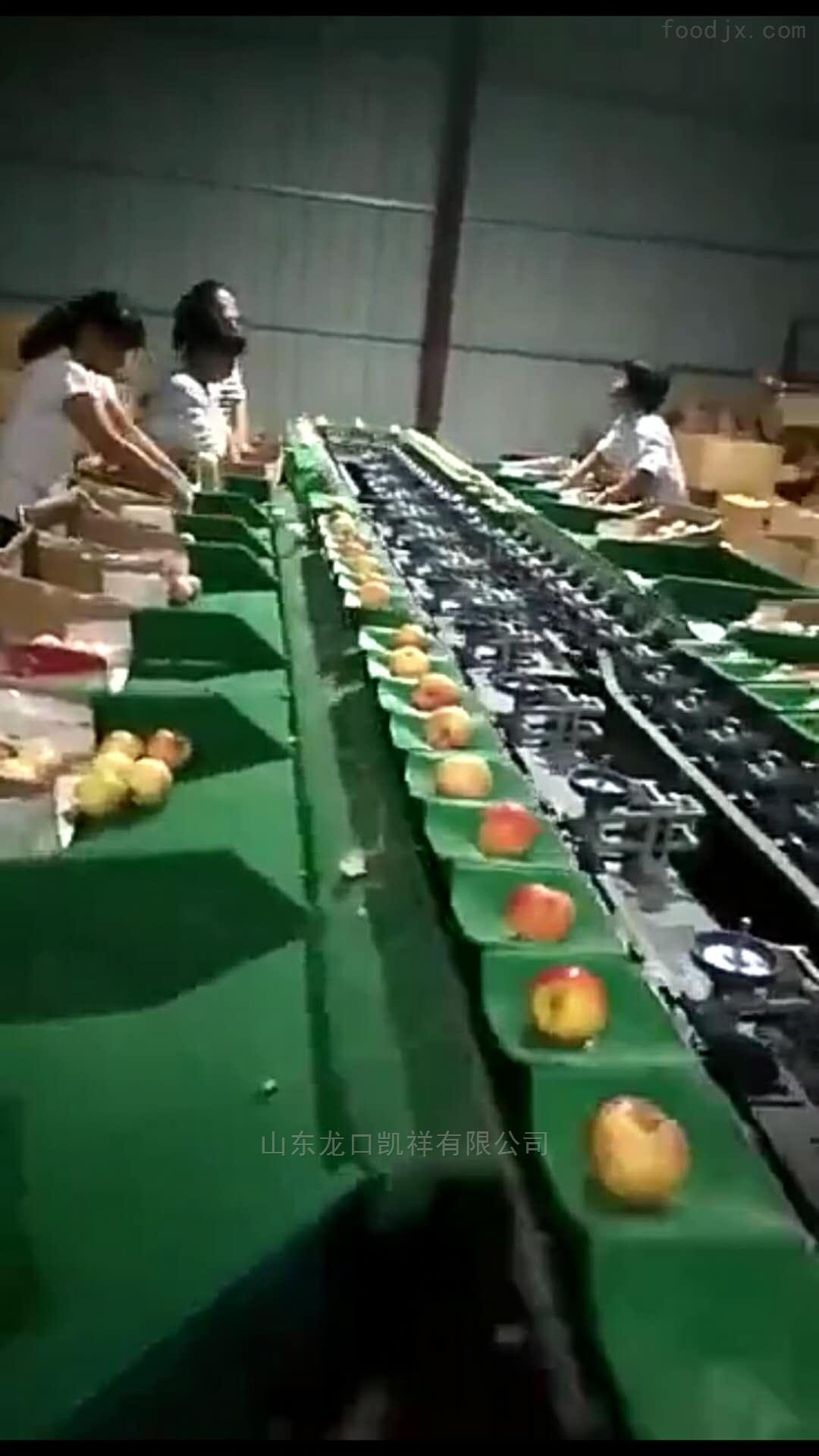 台湾蜜枣分选机 大青枣选果机