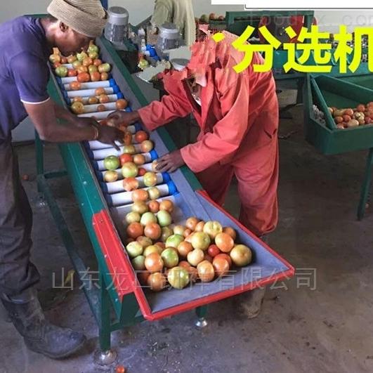 四川柠檬分选机 水果选果机 分果机分级机