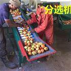 XGJ-SZ四川柠檬分选机 水果选果机 分果机分级机