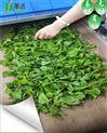 汉中微波茶叶杀青机及茶叶干燥设备