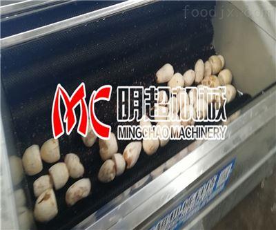 大产量洋葱清洗机用途