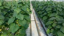 项城市盛鼎厂家生产农业岩棉农用岩棉栽培