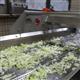 果蔬加工设备果蔬清洗机-德盈食品机械