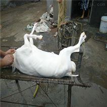羊烫池脱毛机全自动山羊绵羊屠宰打羊毛设备