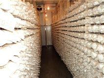 建造一个菌菇冷库成本要多少钱
