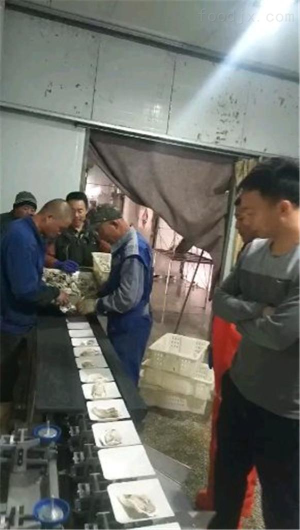 威海牡蛎分拣机厂家直销