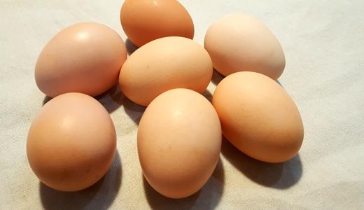 全国首个蛋品安全检测追溯平台在北京启动