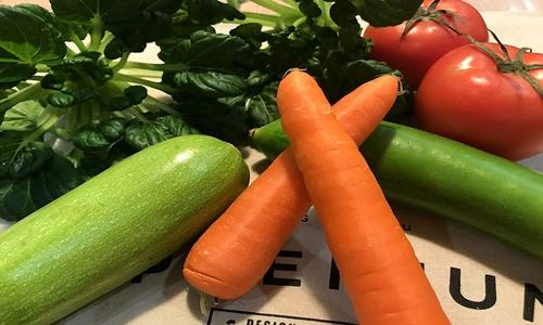 当前我国蔬菜生产机械化发展各有特色