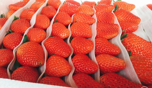 从新鲜草莓中吃出银针? 且看金属探测器守护食安