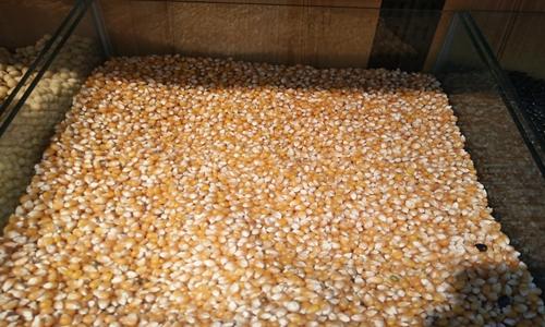 """各地""""三秋""""生产稳步进行 玉米机收率有望再创新高"""