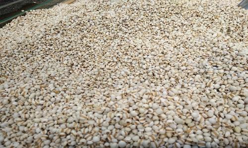 农业及食品相关检测仪器保障粮食安全