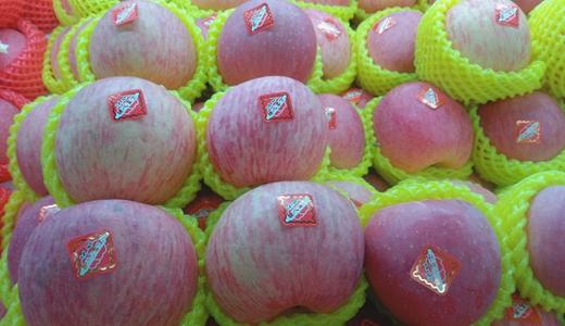 苹果鲜销有门路 分拣、冷藏保鲜齐上阵
