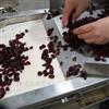 蔓越莓果脯切丁机德盈食品机械