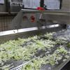 DY-4200果蔬加工设备果蔬清洗机-德盈食品机械